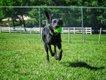 Wayside Waifs Bark Park 2.jpg