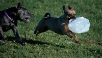 Penn Valley Dog Park - Milk Jug Fun