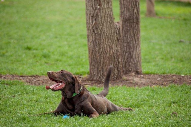 Leawoof Dog Park 2.jpg