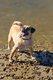 Shawnee Mission Off-Leash Dog Park 2.jpg
