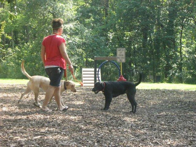 Blue Springs Dog Park 3.jpg
