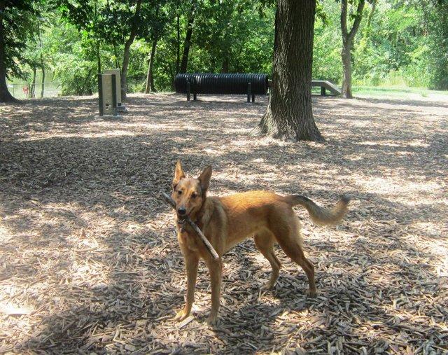 Blue Springs Dog Park.jpg
