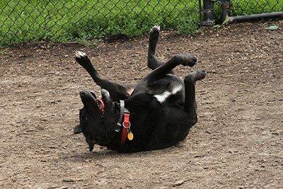 Liberty Dog Park.jpeg