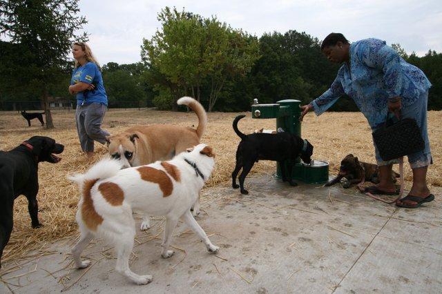 Swope Park Off Leash Dog Park 2.jpg