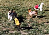 Waggin Trail Dog Park 3.jpg