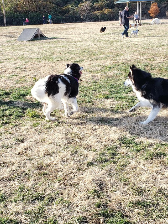 Waggin Trail Dog Park 4.jpg