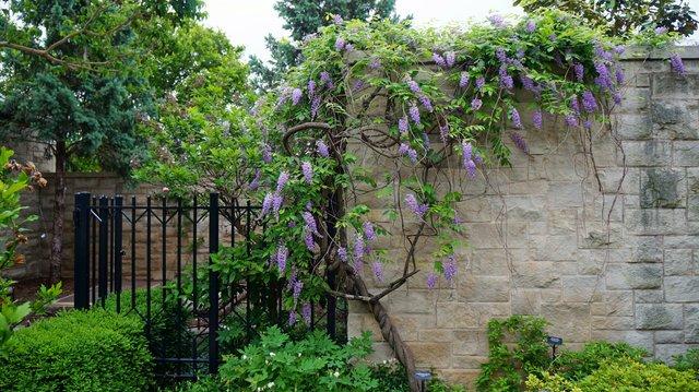 Kauffman Memorial Garden 3.jpg