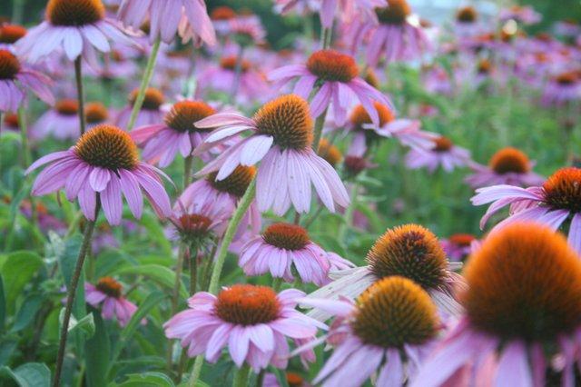 Deanna RoseChildren's Farmstead Image.jpg