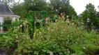 Deanna RoseChildren's Farmstead.jpg