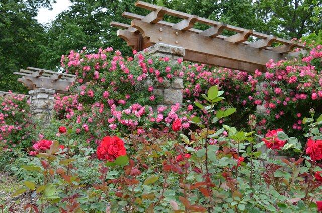 Loose Park Rose Garden 2.jpg