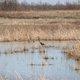 Baker Wetlands 4.jpg