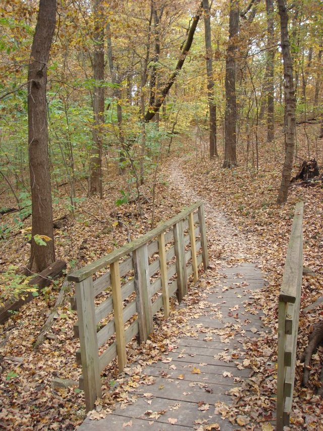Maple Woods Natural Area 2.JPG