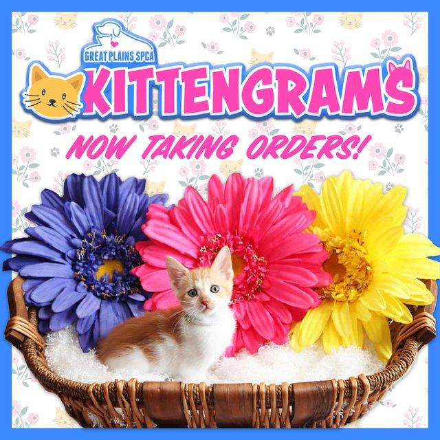 Kittengrams social.png