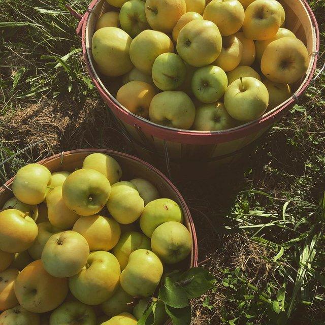 Alldredge Orchards.jpg
