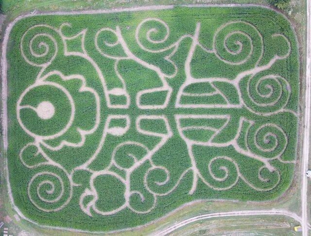 corn-maze-website-1024x779.jpg