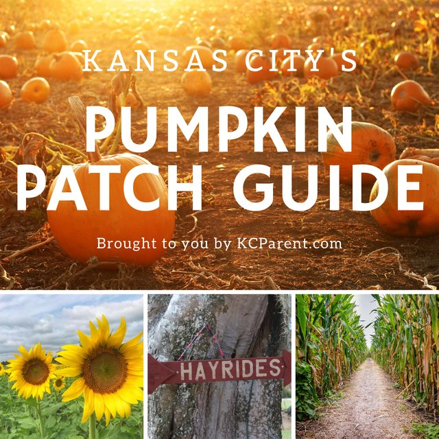 Pumpkin Patch Guide.png