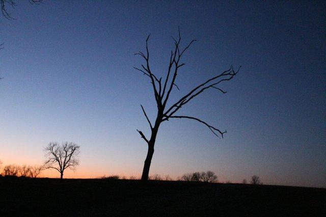 nightatarboretum.jpg