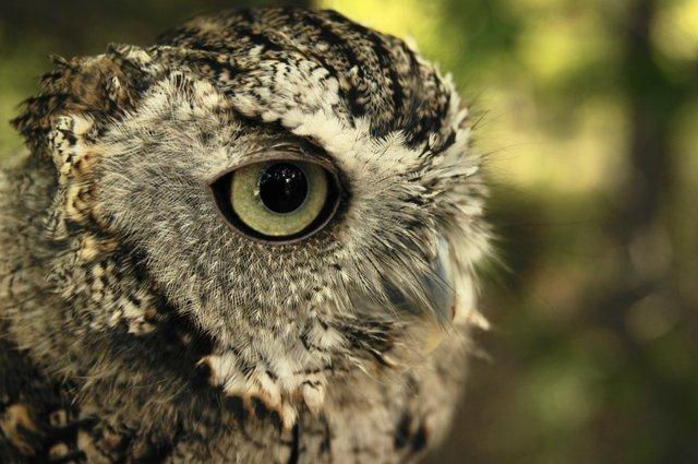 owlprowl.jpg