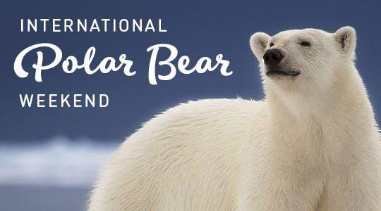 polarbearwknd.jpg