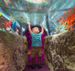 sealifeBlonde-Boy_Tunnel_Square_High-Res.jpg