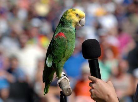 KCZoo SOAR Amazon Parrot(1).jpg.jpe