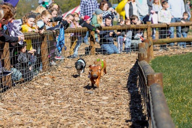 Pig Races Weekends at Fun Farm.jpg
