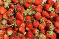 A strawberry picking funfarm.jpg