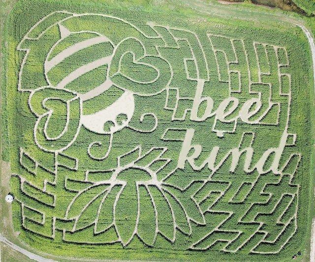2021 corn maze web.jpg
