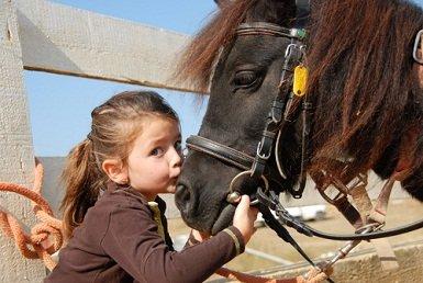 horse.jpg.jpe