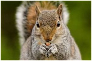 squirrel.jpg.jpe