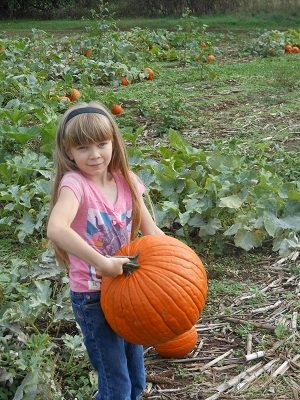 pumpkin.jpg.jpe