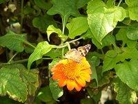 butterfly4.jpg.jpe