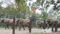 elephantszoo.jpg.jpe