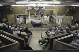 cattle_auction.jpg.jpe