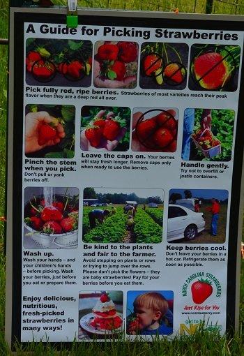 strawberryrules.jpg.jpe