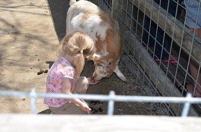 goats2.jpg.jpe