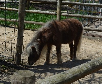 pony.jpg.jpe