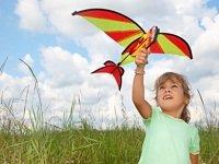 kites.jpg.jpe
