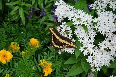 butterfly1.jpg.jpe
