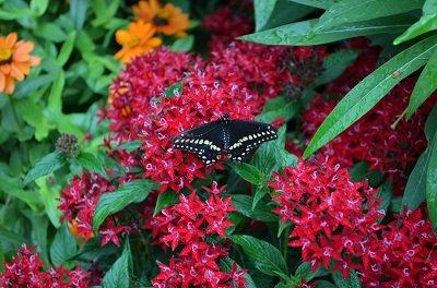 butterfly3.jpg.jpe