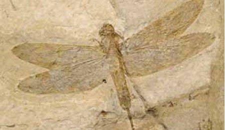 fossil.jpg.jpe