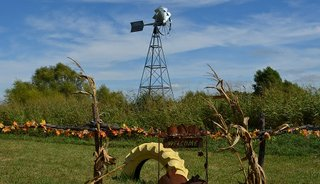 Louisburg Cider Mill Pumpkin Patch