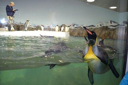 penguinsinside2.jpg.jpe