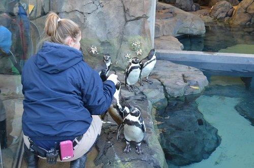 penguinsoutside.jpg.jpe