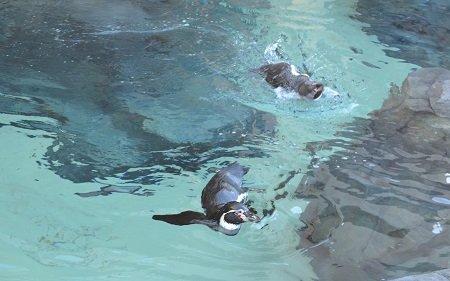 penguinsoutside2.jpg.jpe