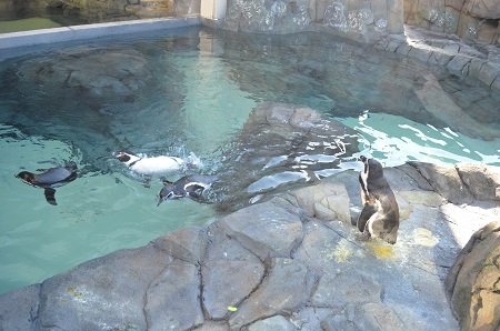 penguinsoutside3.jpg.jpe