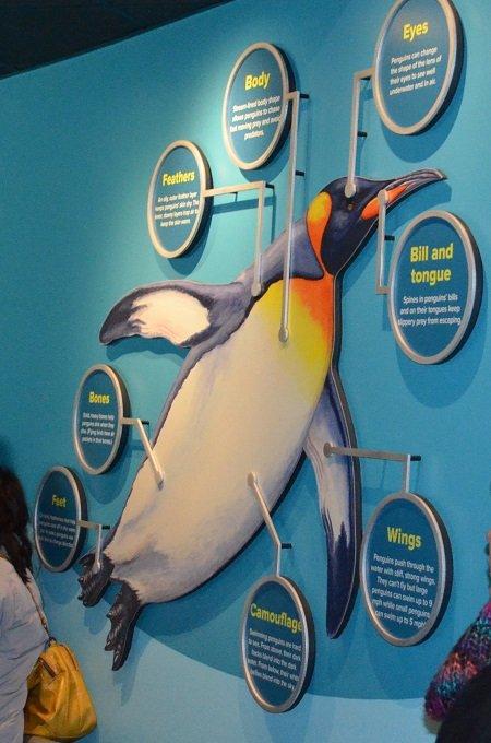 penguindisplay.jpg.jpe