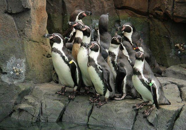 penguingroup.jpg.jpe