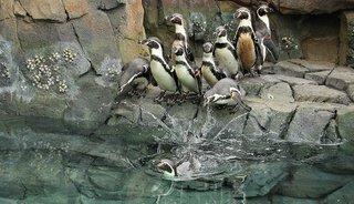 penguinslide.jpg.jpe