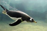 penguin.jpg.jpe